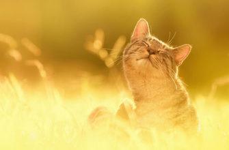 Кот в психологической коррекции личности